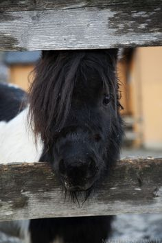 equine-ess:mazthespaz: The cutest pony face Must. Have.