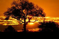 Beautiful Kruger National Park Sunset