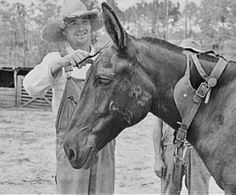 Farmer trimming his Greene County mule. The long ears are inherited from its donkey father and its size inherited from its horse mother Draft Mule, Mules Animal, Farm Clothes, Horse Anatomy, Farm Photography, Work With Animals, Vintage Farm, Draft Horses, Animal Paintings