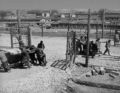 Jewish prisoners at forced labor in Plaszow  1944.  World War Two