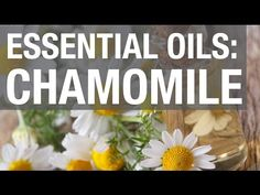 25 Charming Chamomile Oil Uses & Benefits You Will Love