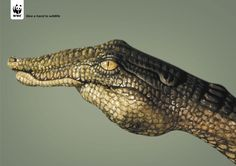 Give-A-Hand-To-Wildlife-Crocodile-o