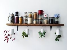 plants / photo by Alena Jaffe