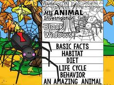 Arachnid Unit Study Humour en coupl...