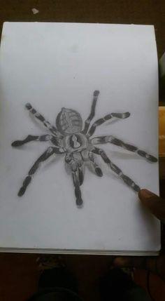 Spider sketch. 3D work