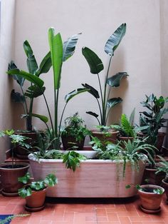 Decorating With Plants (As Seen In Spain)