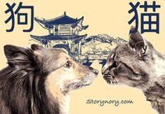 Chinese Cat Dog