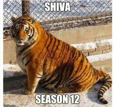 The Walking Dead #SHHIIIVA #SHIVA #KITTEH #TWD