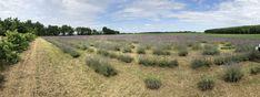 Kallavender & Co. Hungary, Vineyard, Outdoor, Vine Yard, Outdoors, Vineyard Vines, Outdoor Games, The Great Outdoors