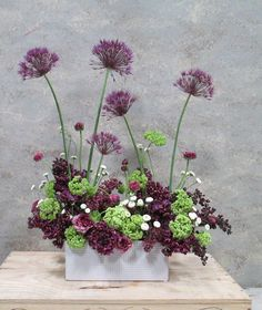 Allium | Dandelion Ranch