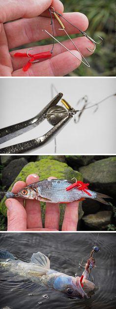 Zander fangen mit dem Drachkovitch-System | Catching zander with the Drachkovitch dead bait rig