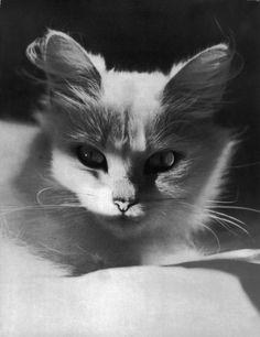 Photo by Werner Bischof - Zurich, Switzerland 1941.