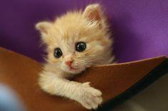 Kittens Animal | Soooo cute kittens (20 photos)