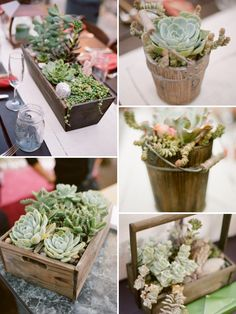 LOVE all these succulent centerpieces!