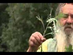 Beifuss - Kräuter und Pflanzenkunde Herb Garden Pallet, Diy Herb Garden, Pallets Garden, Vegetable Garden, Garden Art, Garden Ideas, Gemüseanbau In Kübeln, Garden Leave, Garden Makeover
