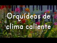 Experto coleccionista de la ABO habla sobre el cuidado de orquídeas - YouTube