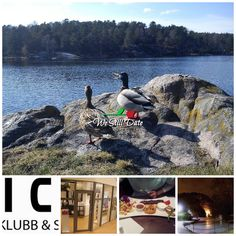 Romantic things to do in Kristiansand Romantic Things To Do, Romantic Dates, Kristiansand, All Over The World, Norway, Stuff To Do, Dating, Mountains, Travel