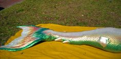 This was Merbella Studio's first tail! The tail that started the business! It is pretty impressive for a first tail and this tail has such a beautiful color scheme. Realistic Mermaid Tails, Mermaid Tails For Kids, The Little Mermaid, Real Mermaids, Mermaids And Mermen, Professional Mermaid, Silicone Mermaid Tails, Mermaid Pictures, Mermaid Drawings
