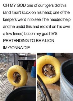 18 Derpy Animal Memes that are both adorable and funny .- 18 Derpy Animal Meme, die sowohl bezaubernd als auch witzig sind – Aww – 18 Derpy Animal Memes that are both adorable and funny – Aww – # adorable - The Animals, Cute Little Animals, Happy Animals, Really Funny Memes, Stupid Funny Memes, Funny Relatable Memes, Funniest Memes, Silly Jokes, Lmfao Funny