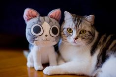 From Buzz Feed - animals with stuffed versions of themselves! (talking about cloning your love ones...)