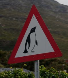Hey, was that penguin hitchhiking?