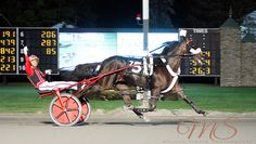 11 best Harness Racing images on Pinterest | Harness racing, Horses