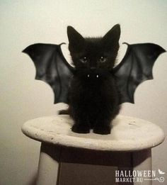 #vampire #halloweenmarket #halloween  #вампир Средневековые самые страшные вампиры (фото)
