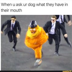 When u ask ur dog what they have in their mouth - chore – popular memes on the site iFunny.co