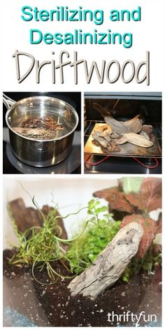 This is a guide about sterilizing and desalinizing driftwood. Processing your nature finds prior to using them in a craft or garden project is a must.