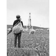 Valdeajos. El sueño del oro negro. El 6 de junio de 1964 se anunció el descubrimiento de un yacimiento de petróleo en el burgalés Páramo de La Lora. En la imagen, Un pastorcillo contempla cómo se levanta la torre de extracción.: Fotografías de ABCFoto en la categoría Lugares