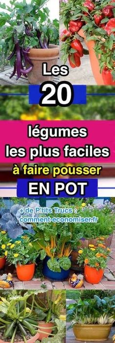 Et oui, certains légumes poussent facilement en pot sur le balcon. Il suffit de& And [& The post And yes, some vegetables grow easily in pots on the balcony. Simply& appeared first on Trending Hair styles.