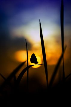 ~~sunset after making love | butterfly silhouette by Muhammad Berkati~~