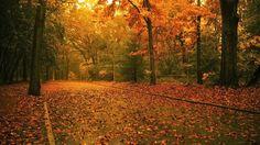 Weg in het bos met herfst bladeren