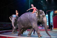 At the circus!
