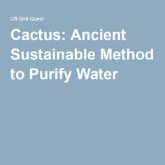 Cactus: Ancient Sustainable Method to Purify Water
