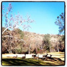 Bidwell Park Chico,CA