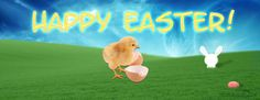 Easter Chicken Facebook Cover