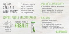Proyecto Mamá Herbalife Chile Herbalife Chile, Herbalife Nutrition, Aloe Vera, Love You, Club, Weight Control, Healthy Living, Wellness, Exercises