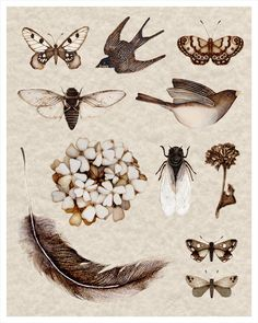 nature collection art print sepia cicada botanical bird insects feathers collective. $25.00, via Etsy.