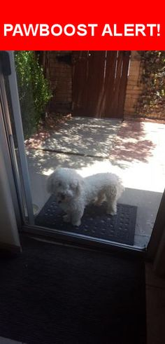 Is this your lost pet? Found in El Paso, TX 79912. Please spread the word so we can find the owner!  White poodle  Near Coral Hills Rd & Snowheights Ct