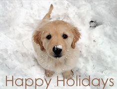 Happy Holidays love cute quote happy snow dog holiday need Christmas greet cheer giving It's MERRY CHRISTMAS!!!