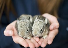 We have a family of bunnies just like this in our backyard. Trying to keep our puppies from wanting to eat them! :(