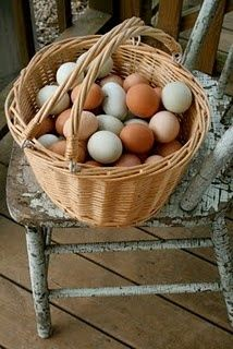 The plantation boasts many different types of chickens, as apparent from the different colored eggs.