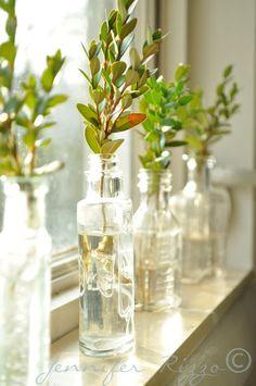 Simple boxwood greens in vintage bottles.