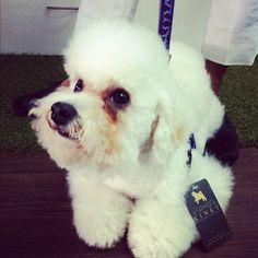 No es @ProsperoTobias, es Ron #poodle con su nuevo corte punk.
