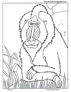 Rainforest African Rainforest Animals Coloring Page African