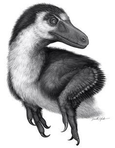 An Acheroraptor temertyorum by Danielle Dufault