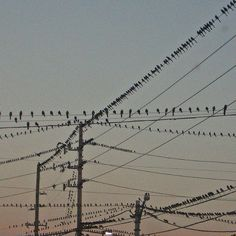 29/365 these birds FACINATE me by mbkepp, via Flickr