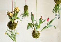 DIY : comment réaliser un Kokedama ? Sphère Mousse Fleurs Bulbes