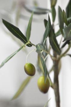 FLORA decoration olive branch. Lene Bjerre, spring 2014.